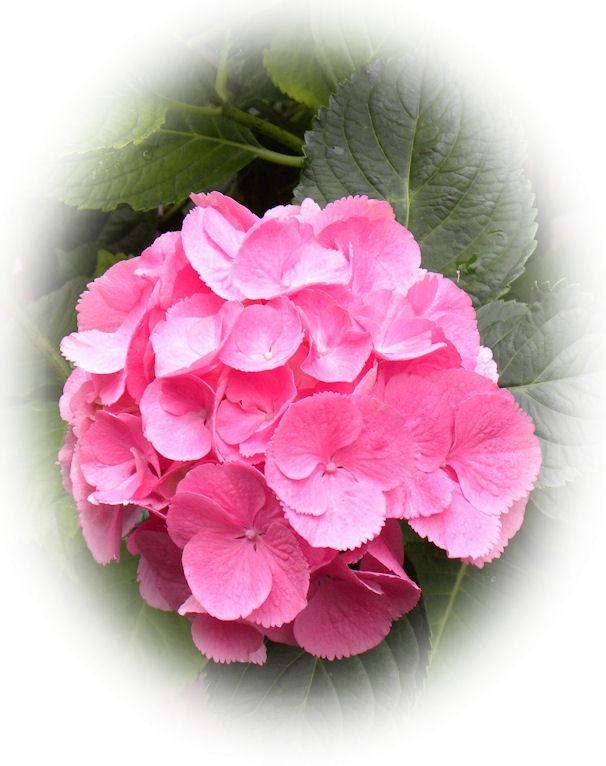 Bloemen Blij Dat Ik Brei