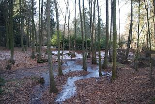 Ein Bach schlängelt sich durch einen Wald