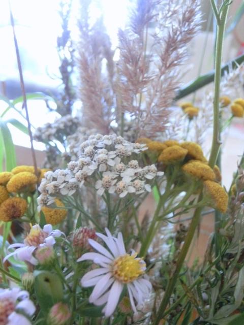 цветы и травы, стара каламарка