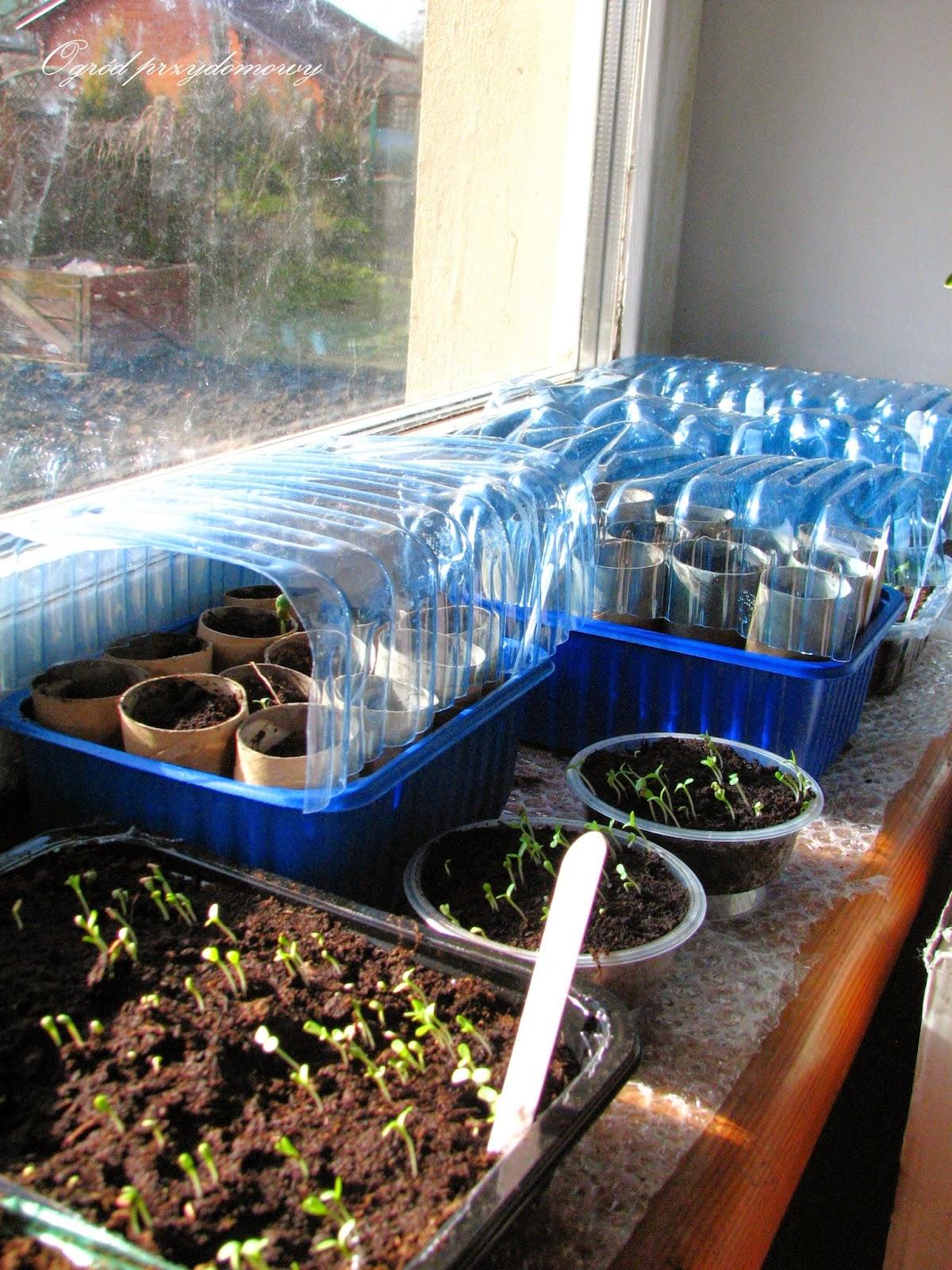 eko doniczki, ogród za grosze, ekologiczne doniczki, plastikowe szklarenki z butelek, szklarenki z butelek plastikowych, ogród przydomowy