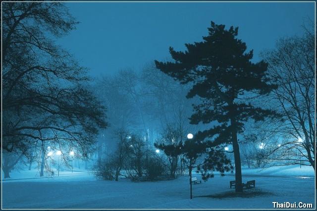 ảnh công viên đêm mùa đông