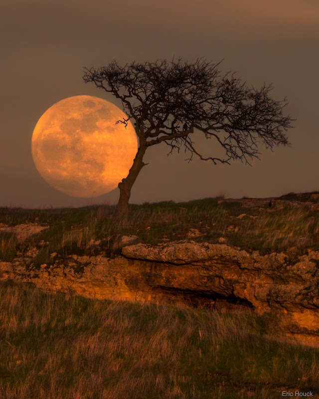 Trăng xanh và cây cô đơn. Hình ảnh: Eric Houck.