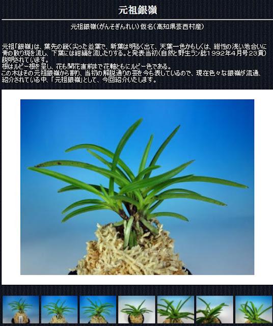 http://www.fuuran.jp/jiman_gansoginrei.html
