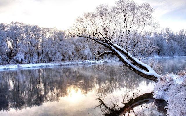 Bevroren kanaal met veel bomen aan de overkant