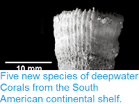 http://sciencythoughts.blogspot.co.uk/2013/10/five-new-species-of-deepwater-corals.html