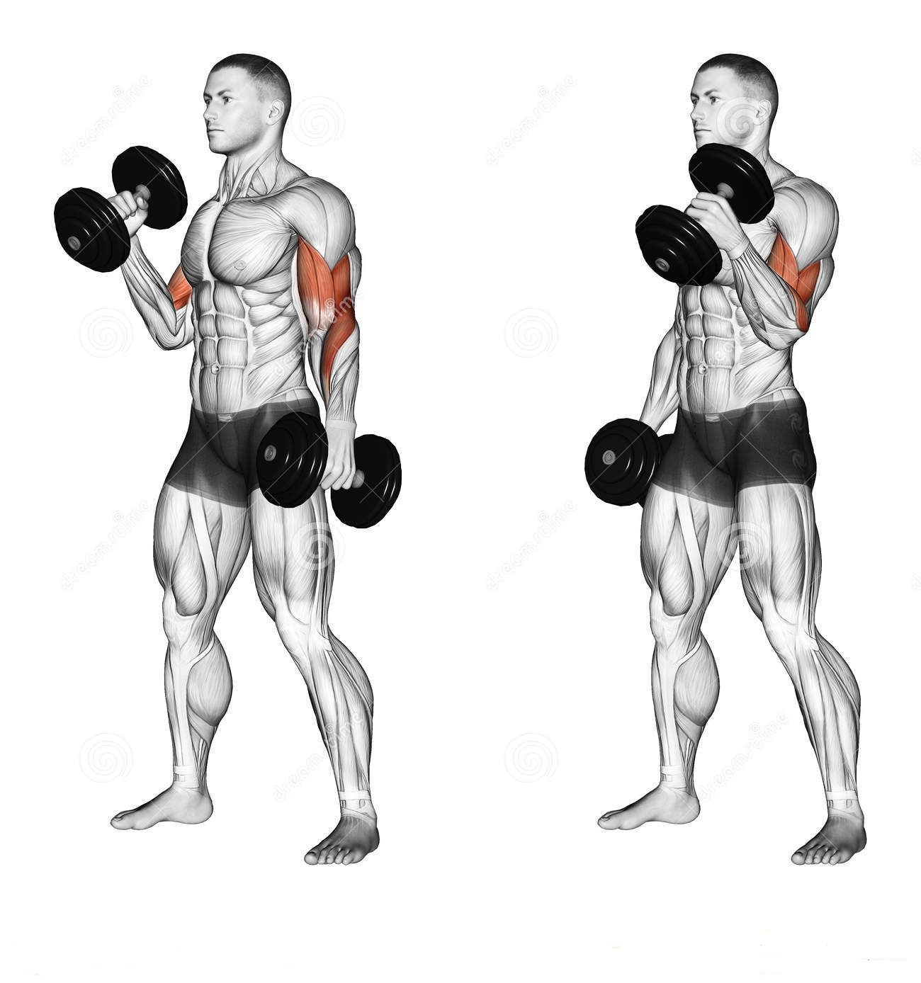 Bodybuilder Workouts To Build The Biceps And Triceps