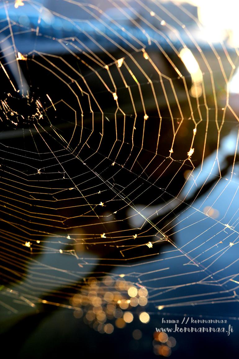hämähäkinseitti bokeh