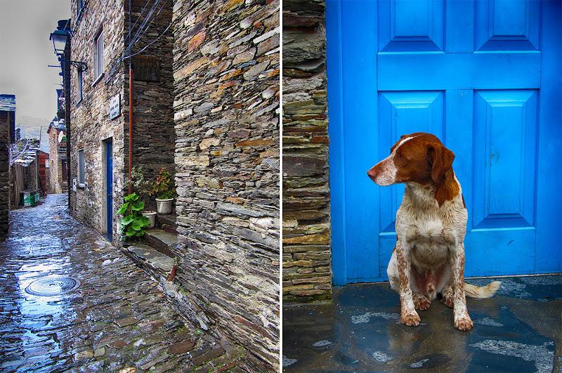Rua e cão em Piodão