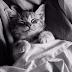 Popüler Erkek Ve Dişi Kedi isim Listesi