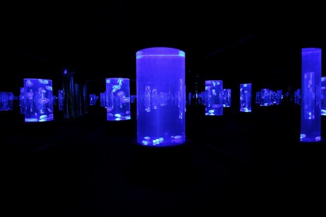 Laberinto de medusas en el Acuario Dos Océanos