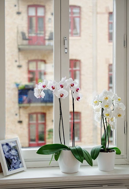Decorate Your Interior With Orchids 1