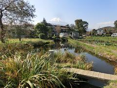 忍野八海・菖蒲池