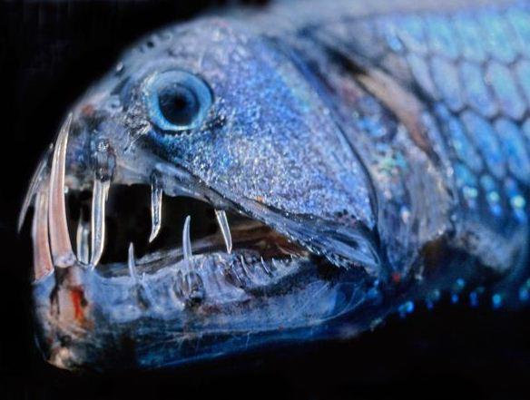 Tiefseefische
