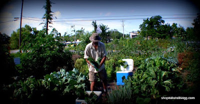 Picture of gardener working at an organic garden
