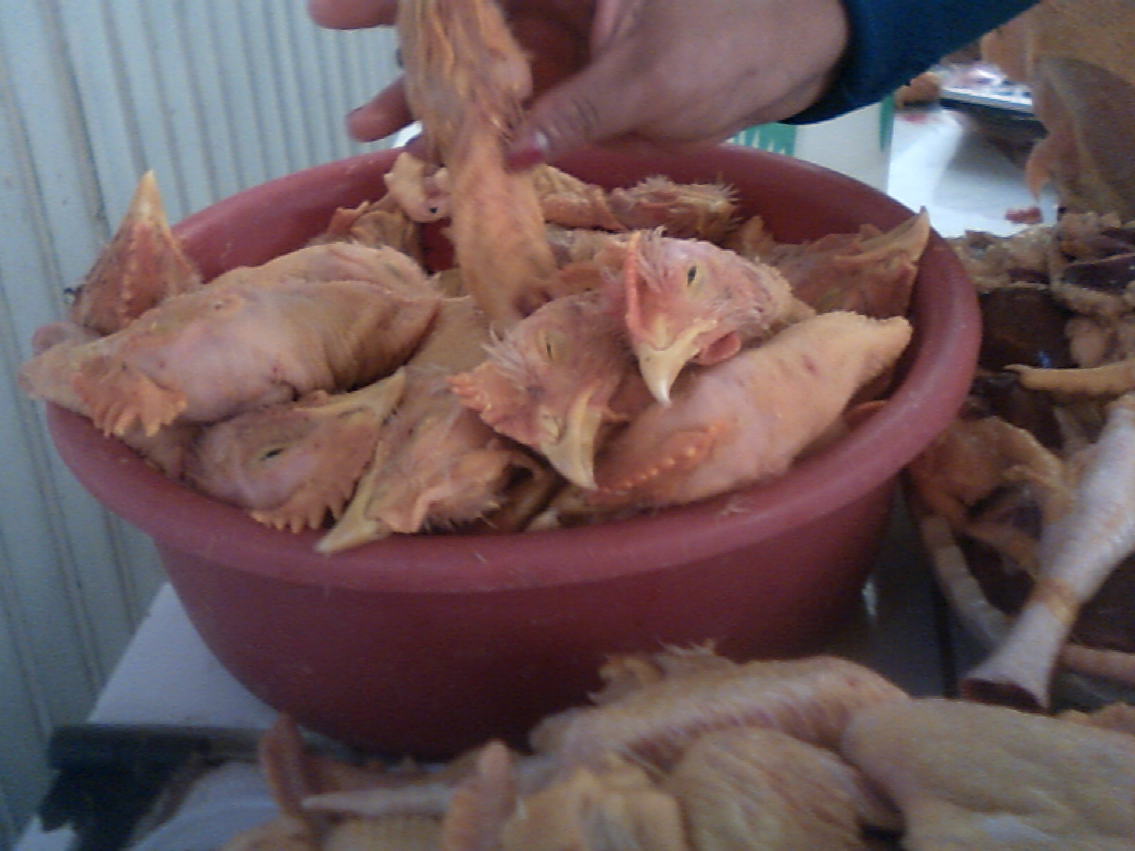 Kfc Chickens Without Heads - photo#6