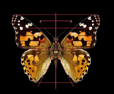 http://concurso.cnice.mec.es/cnice2005/96_ritmo_simetria/curso/archivos/sim_axial.swf