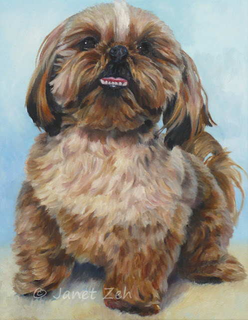 Shih Tzu dog portrait on canvas 11x14 inches