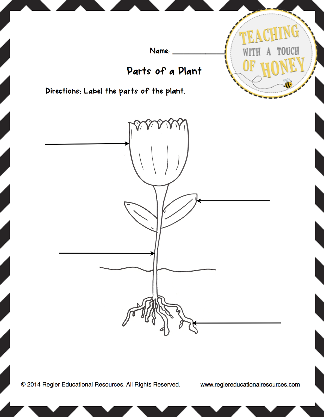 Classroom Freebies Too Freebie Label The Plant Tiered Templates