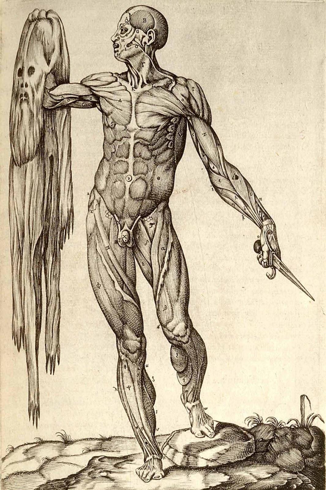 Introduccion a sistema muscular | Sistema muscular
