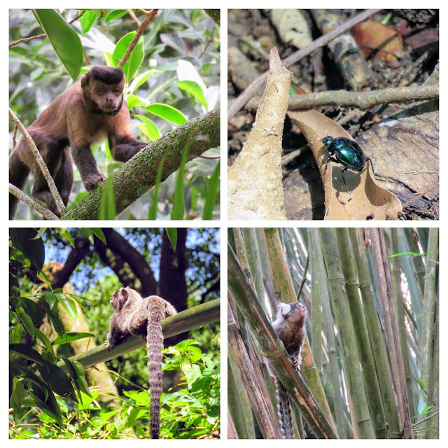 Awesome activities in Rio: spotting monkeys and insects on a Jungle Me Hike in Tijuca National Forest
