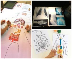 materiales imprimibles proyecto cuerpo humano