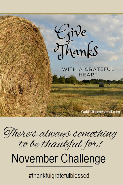 Join my in this November thankfulness challenge!