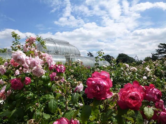 http://bugsandfishes.blogspot.com/2018/06/summer-at-kew-rose-garden.html