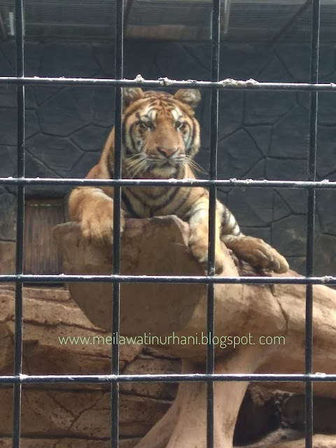Asyiknya Berkunjung ke Kebun Binatang Bandung yang Kini Semakin Nyaman dan Memanjakan Mata