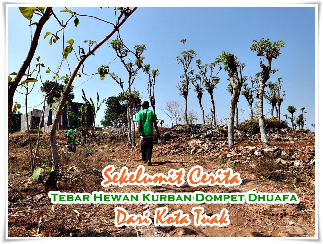 Kurbanesia tebar hewan kurban Domapet Dhuafa di Tuban