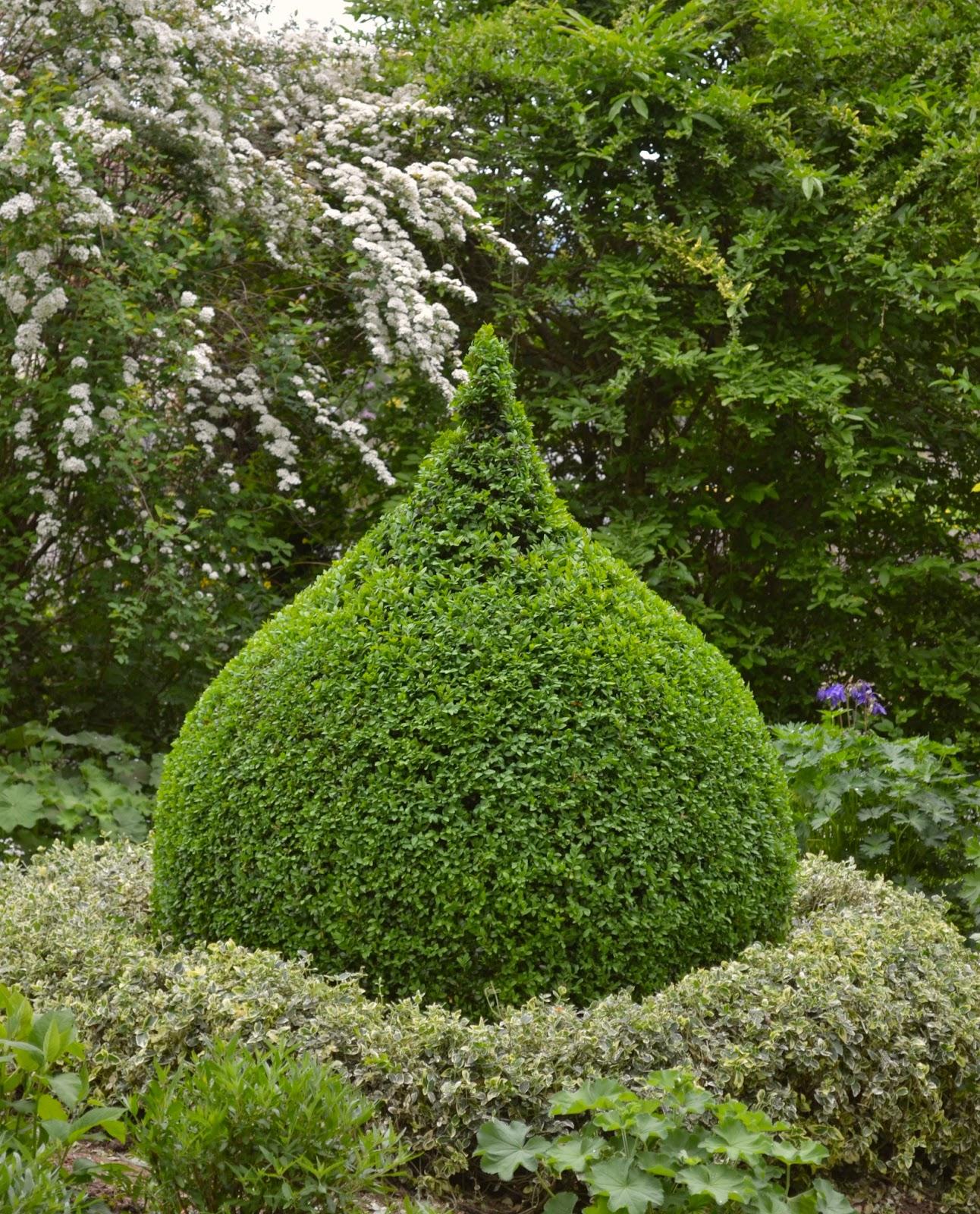 buchsbaum rund schneiden buchsbaum mit schablone schneiden mein sch ner garten buchsbaum. Black Bedroom Furniture Sets. Home Design Ideas