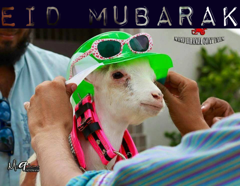 Eid ul Adha Funny Photos And Cartoons ~ Sajna Fun 4 You
