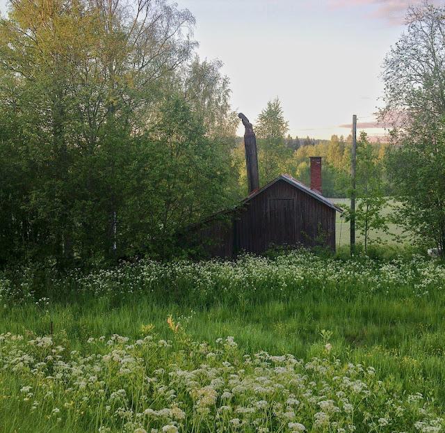 kesäyö, juhannus, kesä, niitty