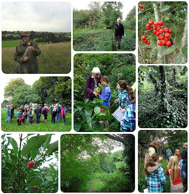 Sustainable Foraging in Sussex Millenium Woods
