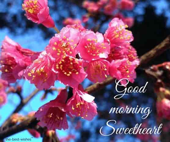 good morning sweetheart flower images