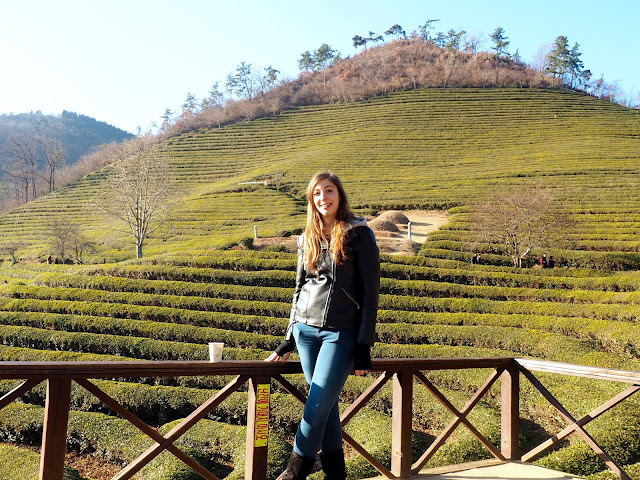 Posing for photos by the hill of green tea plants at Boseong Green Tea Plantation, South Korea