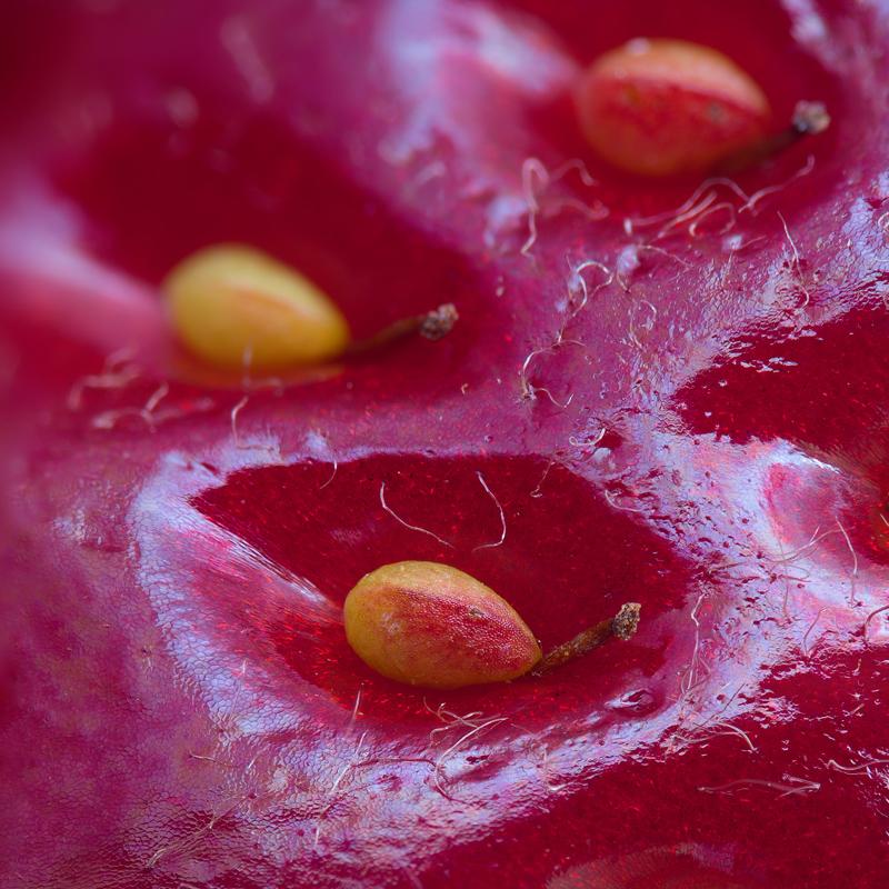 Imagen del día: La superficie de una fresa