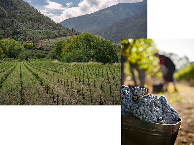 Effect of terroir on grapes and wine