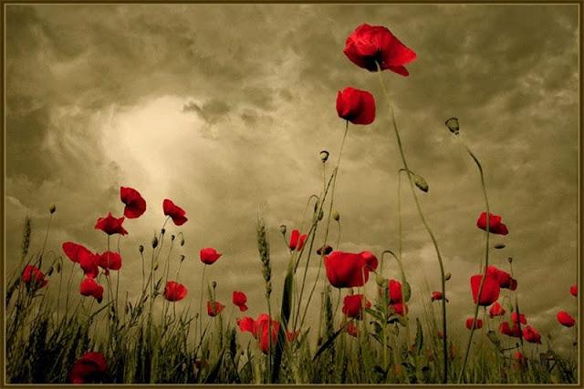 https://2.bp.blogspot.com/-FhLdSOG9PX8/VSArXrALK2I/AAAAAAAATgM/iZCfJ_jiyZA/s1600/smell-poppy-red-flower.jpg