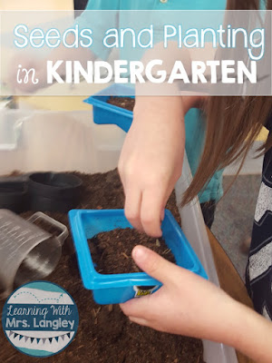 We had a lot of fun with this lesson plan for planting seeds today in kindergarten. It can be fun and without the mess if you plan for it! This would be easy for kindergarten and preschool students alike to compare contrast seeds, learn step by step directions, talk about life cycles, and just have some hands on fun!