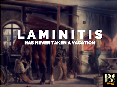 laminitis has never taken a vacation