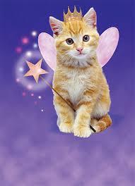cat birthday wallpaper hd