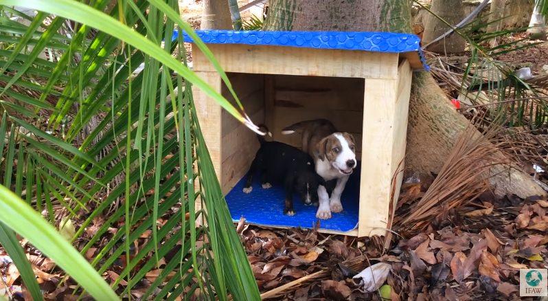 Tuzita e Soruya, dois cachorros do projeto Casitas Azules