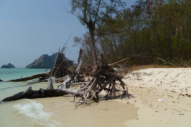 Korzenie na plaży