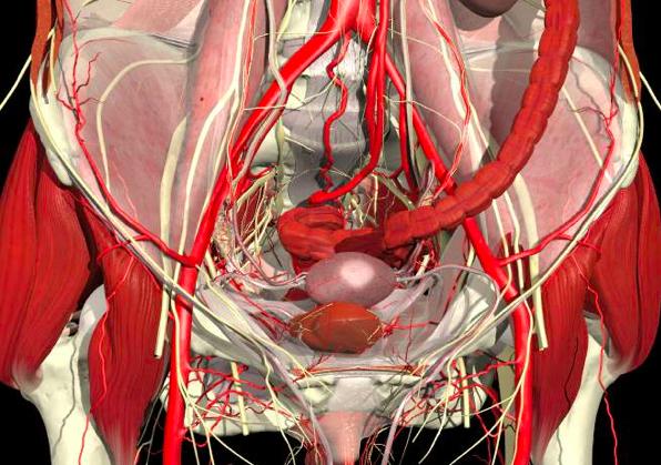 Endometriosis Articles Studies And Musings Pelvic Floor Spasm