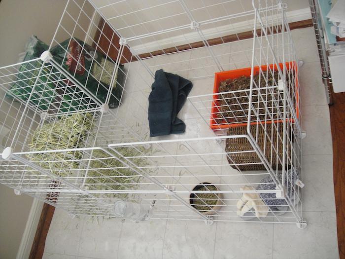 Totoro the Velvet Lion Bunny Rabbit: Setting up the bunny's