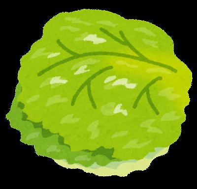 vegetable_lettuce.png
