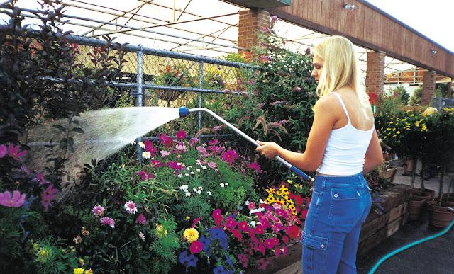 Perawatan Bunga Selalu Segar