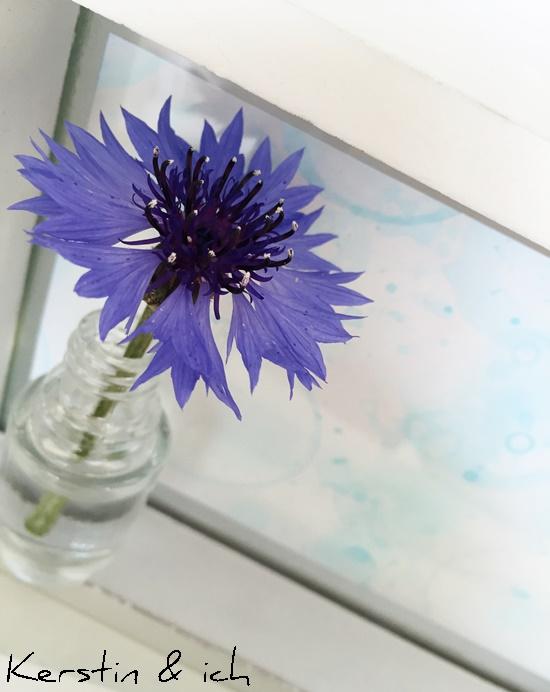Blumen Kornblumen Seifenblasenbilder