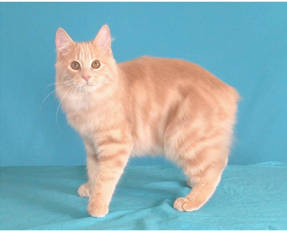 gato - photo #24