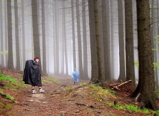 Świerkowy las.imponujący wielkością drzew.